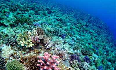 海洋環境細菌を対象としたマリンバイオテクノロジー